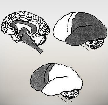 О 3 блоках мозга